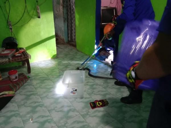 Petugas UPT Pemadam Kebakaran Kota Malang saat melakukan evakuasi terhadap ular yang masuk di rumah Jalan Kolonel Sugiono Gang I Senin (14/6/2021). (Foto: UPT Pemadam Kebakaran Kota Malang)