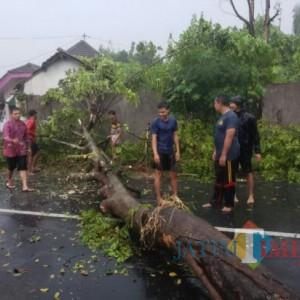 Pohon Tumbang di Lumajang Tewaskan Pengendara Motor
