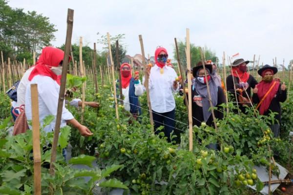 Ketua TP PKK Kota Malang Widayati Sutiaji saat berada di lokasi pertanian warga. (Foto: Humas Pemkot Malang)