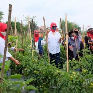 Kota Malang Gencarkan Pertanian Perkotaan lewat Urban Farming