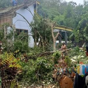 Hujan Deras, Pohon Beringin di Blendis Tumbang dan Timpa Rumah Warga