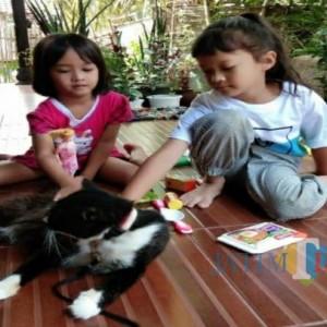 Loose, Kisah Kucing Keluarga Setia di Tulungagung yang Mati Mengenaskan