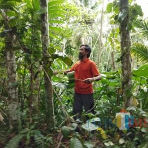 Nominator Peraih Kalpataru dari Lumajang, Tanam 12 Ribu Pohon Pinang di Lereng Lemongan