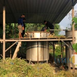 Kerjasama dengan Perhutani, Warga Binaan Lapas Tuban Produksi Minyak Kayu Putih
