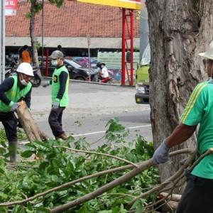 """Sigap"" Curah Hujan Tinggi, DLHKP Kota Kediri Pelihara Pohon"