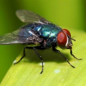 Disebut di Alquran dan Hadis, Fakta Lalat yang Harus Kamu Tahu