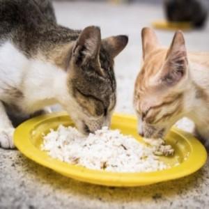 Jangan Pernah Diusir, Ini 3 Pesan Allah Melalui Kucing yang Mendekat Saat Kamu Makan!