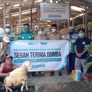 Berdayakan Peternak, Laznas Nurul Hayat Banyuwangi Serahkan Bantuan 50 Ekor Domba