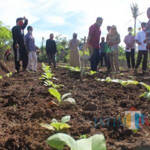Petani Desa Ngrejo Mulai Bertanam Tembakau, Dispertapa Blitar Beri Pendampingan Pengolahan Tanah