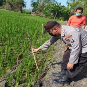 Petani di Jombang Tewas Tersengat Listrik dari Jebakan Tikus di Sawah