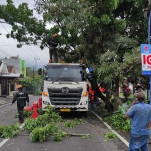 Kecelakaan Tunggal, Truk Logistik Tabrak Pohon Mahoni di Kota Batu