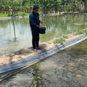 Penjualan Ikan Koi Menggeliat Selama Pandemi, Petani di Malang Untung Gede