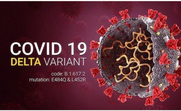 Covid-19 varian Delta (Foto: Tribal Radio)