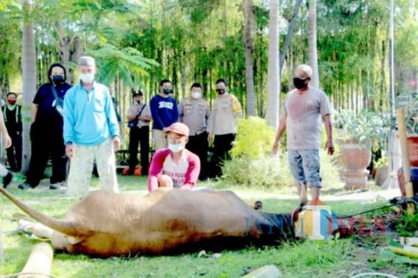 Prosesi penyembelihan hewan kurban di Polres Lumajang (Foto: Bramastyo Dhieka Anugerah/ JatimTimes)