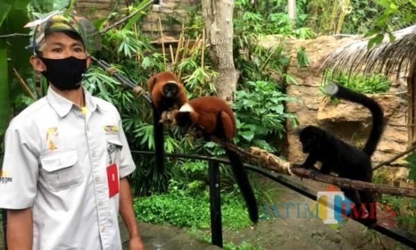 Salah satu keeper saat memberikan pakan kepada satwa di Batu Secrer Zoo. (Foto: Irsya Richa/MalangTIMES)
