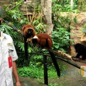Tempat Wisata Ditutup, Kebutuhan Makan Satwa di Batu Secret Zoo Capai Setengah Miliar