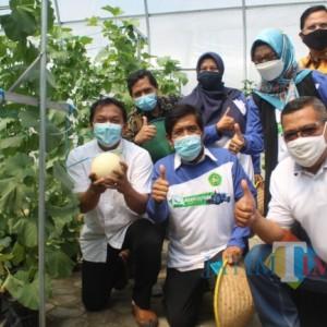 Perkuat Sinergi dengan Dunia Usaha, Unisba Blitar Panen Perdana Melon lewat Green House