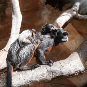 6 Satwa Batu Secret Zoo Melahirkan Selama PPKM Darurat, Tidak Ada Yang Kena Covid-19