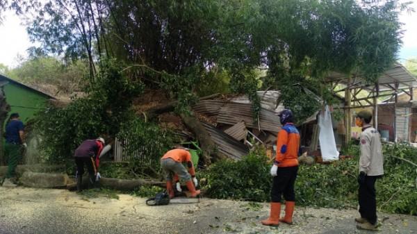 Rumah dan warung Murti yang tertimpa pohon beringin di Jalan Oro-Oro Ombo (Curah Krikil) Barat, RT 02 RW 07, Kecamatan Batu, Kota Batu, Selasa (14/8/2021). (Foto: istimewa)