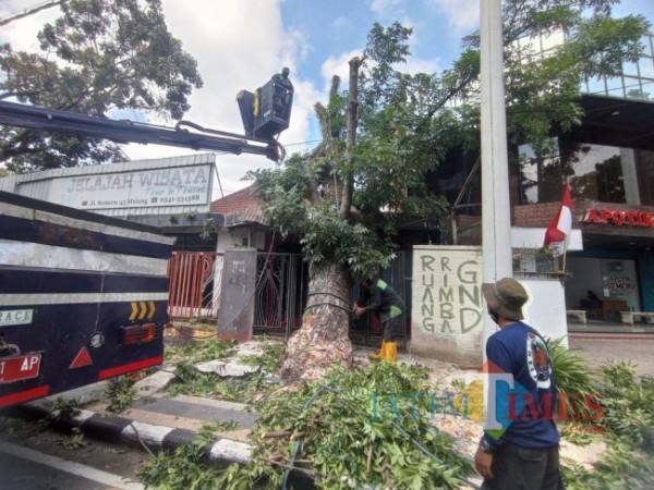 Tim DLH Kota Malang saat melakukan perempesan pohon di Jalan Semeru (foto: Hendra Saputra/MalangTIMES)