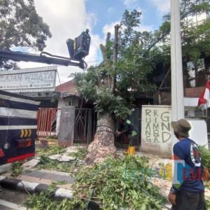 Lakukan Perempesan Pohon, DLH Kota Malang: Pasti Kami Survei Dulu