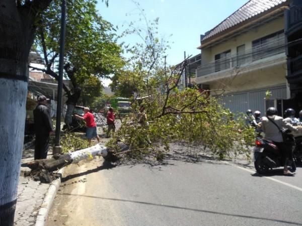 Pohon ceri yang tumbang menutup setengah jalan Trunojoyo, Kelurahan Songgokerto, Kecamatan Batu, Kota Batu. (Foto: istimewa)