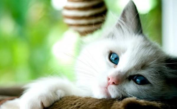 Kucing (Foto: BBC.com)