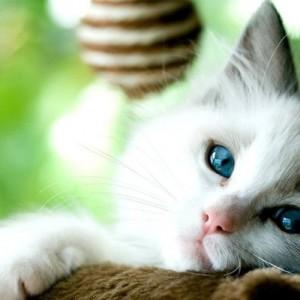 3 Tanda Pesan Allah SWT Kepada Manusia Melalui Kucing yang Tak Banyak Disadari