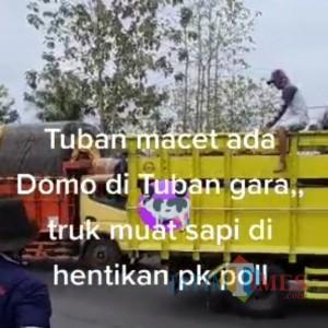 Viral Truk Pengangkut Sapi Blokir Jalan Raya di Tuban