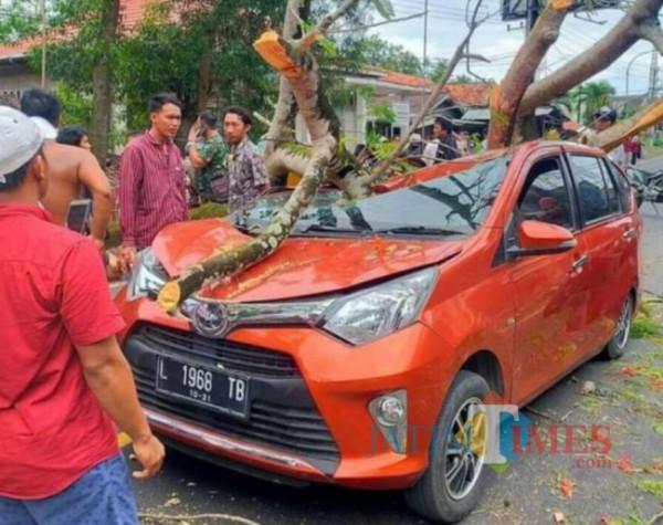 Mobil Toyota Calya ringsek tertimpa pohon di Bangkalan. (Foto: Redaksi BangkalanTIMES)
