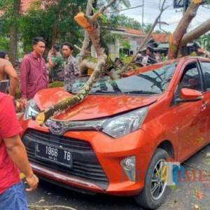 Mobil Ringsek Tertimpa Pohon, Satu Penumpang Dilarikan ke Rumah Sakit