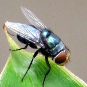 Hewan Serangga Hampir Punah, Benarkah Pertanda Kiamat Semakin Dekat?