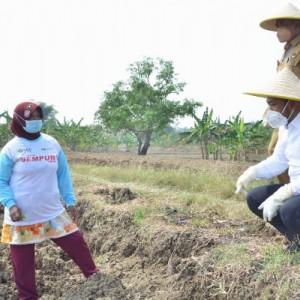 Bupati Gresik Jadikan Desa Setro Pilot Project Pertanian