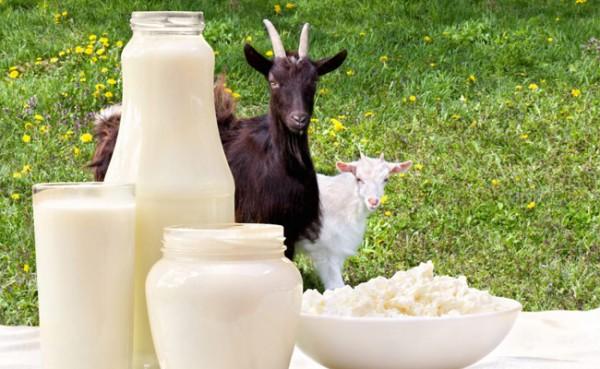 Susu Kambing (Foto: Lezizemland Goat's Milk Biscuits)