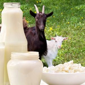 Jadi Minuman Favorit Rasulullah, Ini 7 Manfaat Sehat Susu Kambing