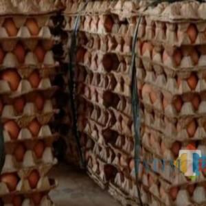 Tak Adakan Aksi, Peternak Ayam di Tulungagung Beri Dukungan Bagi-Bagi Telur di Blitar