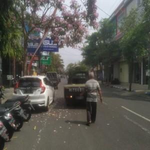 Menikmati Indahnya Tabebuya yang Bermekaran di Jalan Diponegoro Tulungagung