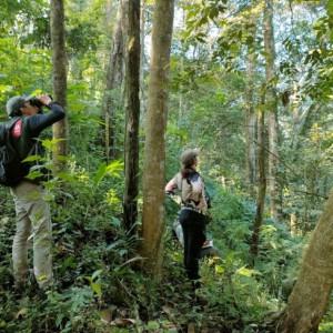 PROFAUNA Temukan 9 Jenis Burung Dilindungi di Hutan Lindung RPH Sekar