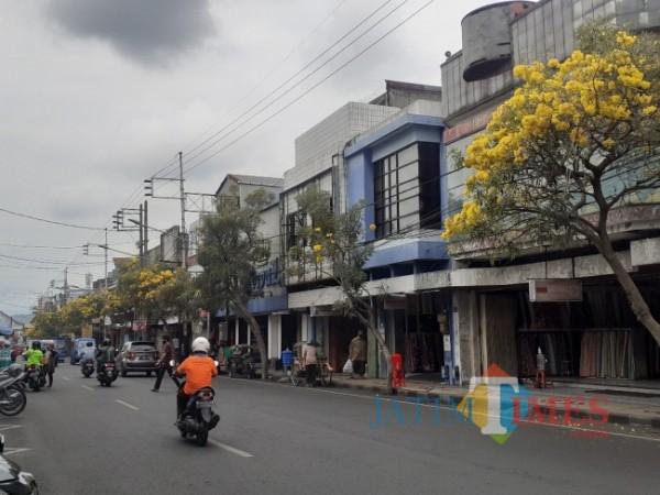 Bermekaran, Pohon Tabebuya di kawasan Pasar Besar Kota Malang. (Arifina Cahyanti Firdausi/ MalangTIMES).