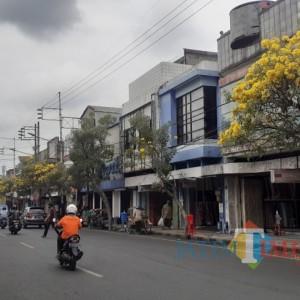 Bikin Estetik, DLH Kota Malang Bakal Tambah Tanaman Tabebuya di Kawasan Kayutangan Heritage