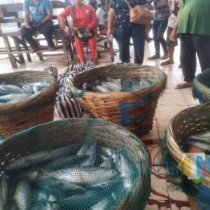 Ikan Laut Tetap Jadi Pilihan di Tengah Murahnya Daging Ayam di Tulungagung