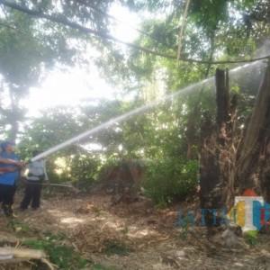Siang Ini, Punden Keramat di Tulungagung Kembali Terbakar, Damkar Turun Tangan Lagi