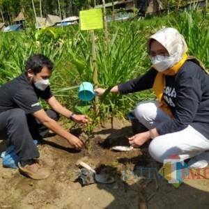 LMDH dan Perhutani Lumajang Tanam Pinang dan Mahoni Berkonsep Sedekah Pohon