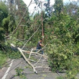 Angin Kencang di Kota Batu Tumbangkan Pohon Setinggi 15 Meter