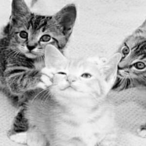 Apa Makna Ndomblong  di Lagu Kucingku Telu, Ini Jawaban Remaja Zaman Now di Tulungagung