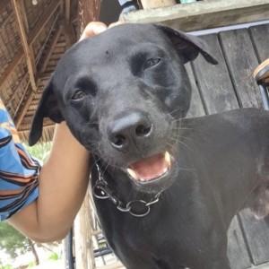 Diduga Dianiaya Oknum Satpol-PP Aceh Singkil, Animal Defender Siap Laporkan Kasus Kematian Anjing ke Polisi