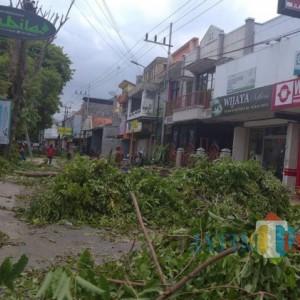 Musim Hujan, DLH Lumajang Pangkas Pohon Tepi Jalan