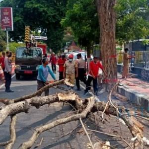 Ranting Pohon Berukuran Besar Patah, Akses Menuju Makam Bung Karno Terganggu